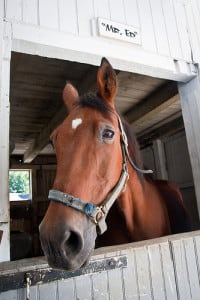 ed horse
