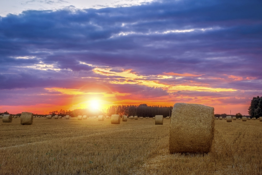 Sunset over a field of hay