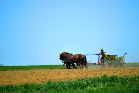Amish man plowing his field at harvest time